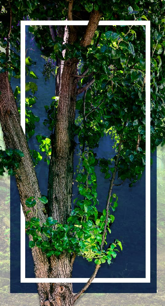 Vertical Banner: Tree