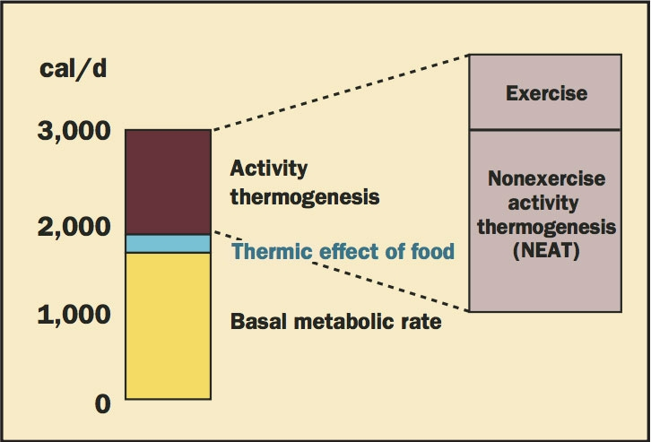 The Role of Nonexercise Activity Thermogenesis